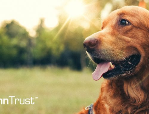 CannTrust® Enters Veterinary Cannabis Market Through Partnership...